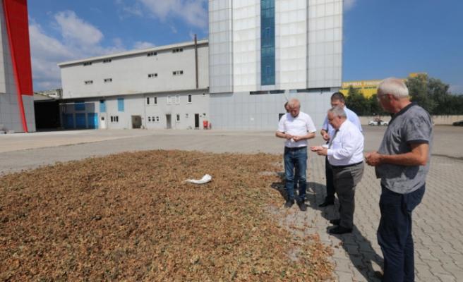 Vali Nayir Sarılar Fındık Fabrikasında İncelemelerde Bulundu