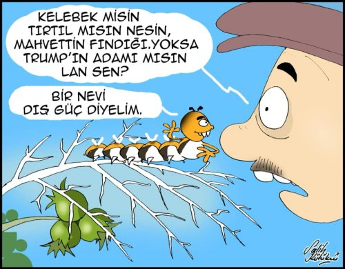 Amerikan Kelebeği,fındık üreticisini bıktırdı...